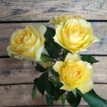 Кустовые розы <sup>31</sup>