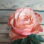 Пионовидные розы <sup>15</sup>