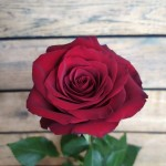 Розы <sup>20</sup>